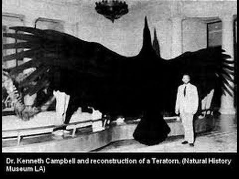 Thunderbird ( Giant Bird ) Near South Greensburg, PA - YouTube - photo#32
