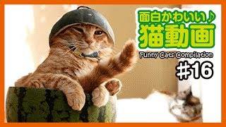 Cover images 【おもしろ猫動画】爆笑!!面白かわいい猫動画まとめ16【funny cats】