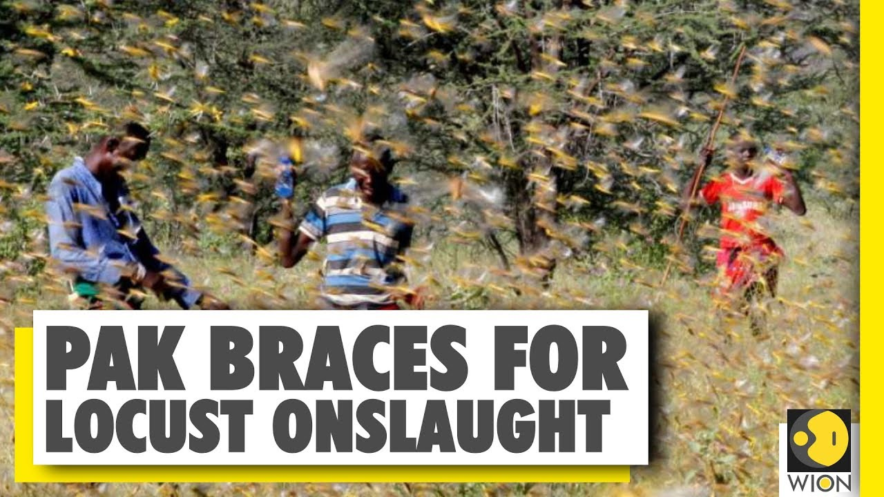 Your Story: Locust outbreak threatens Africa and Asia | WION News | World News