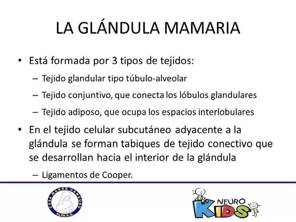 Anatomia y fisiologia de la glandula mamaria - YouTube