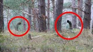 5 Beängstigende Dinge die im Wald gefunden wurden!
