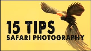 SAFARI PHOTOGRAPHY | 15 Tips for Wildlife Photography in Africa