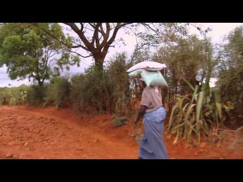 Planting Season - Hear Africa's seed distribution in Mutambara