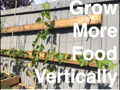 Grow more Food Vertically 5 EZ ways with Added Benefits in the Alberta Urban Garden