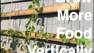 Grow More Food Vertically 5 Ez Ways With Added Benefits In The Alberta Urban Garden