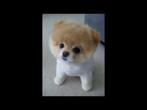 Funny Dogs Compilation - Happy Birthday!!!