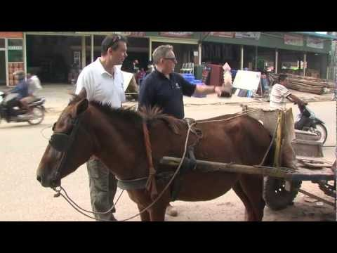 New partnership helps Cambodia's sports and working ponies