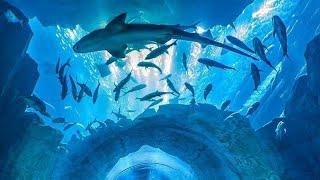 Dubai aquarium  Dubaimall  Shark  Dubai  UAE  @Logan Paul @MrBeast