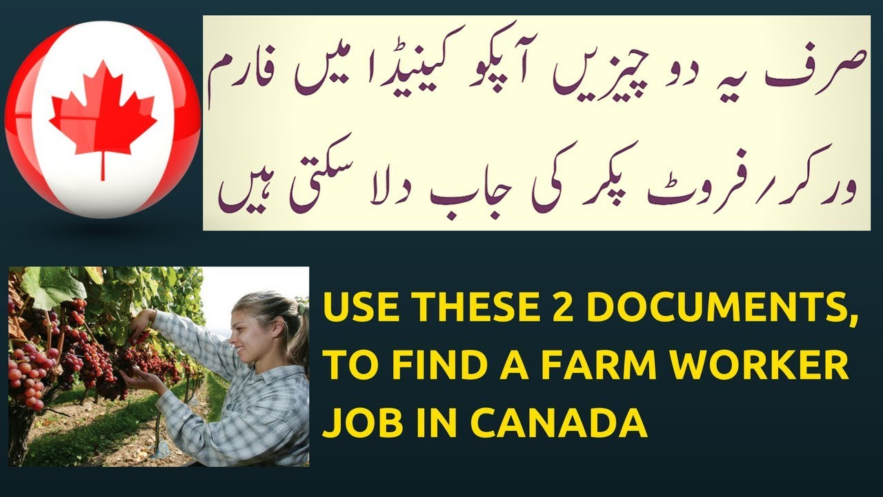 How to Get Fruit Picker Job in Canada for Pakistani and Indians