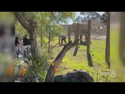 25-year-old father carries his toddler daughter into elephant enclosure at San Diego Zoo
