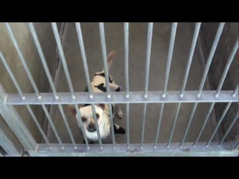 OC Animal Shelter Dogs 1
