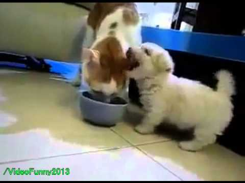 Puppy Pestering a Cat