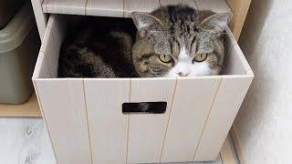 かくれんぼ遊びとねこ。-Hide and seek and cats.-