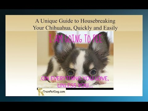 How To Potty Train A Chihuahua -Take The Heartbreak Out Of Housebreaking  Potty Training A Chihuahua