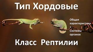 14.1 Рептилии часть I (7 класс) - биология, подготовка к ЕГЭ и ОГЭ 2018
