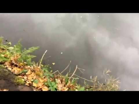 Pike Fishing River Weaver Winsford Cheshire