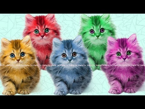 Five little kittens jumping on the bed | Cute Kitten Cat Colorful Learning Color Video For Kids