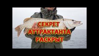 Секреты рыбалки уловистые приманки на судака на окуня на щуку аттрактант для хищника и красители