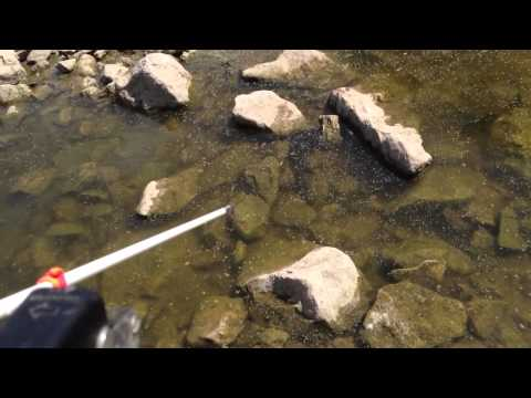 Bowfishing Catfish in Kansas