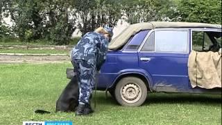 В Ярославле соревновались служебные собаки