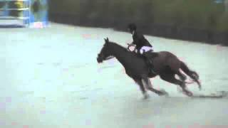 Video of Morocco ridden by Lisa Goldman from ShowNet!