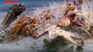 Sự sống - Loài cá (Phần 1): Bá Chủ Đại Dương (Thiên nhiên kỳ thú)