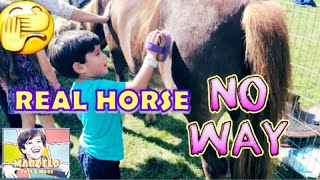 KIDS PETTING ANIMALS AT LOCAL FAIR/Toddle riding a real horse/Bounce House/outside fair Game