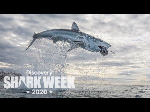 The Ultimate Air Jaws Breach!   Shark Week