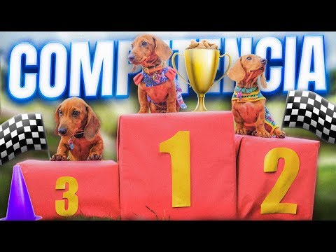 PUPPIES COMPETITION | THE POLYNESIANS VLOGS
