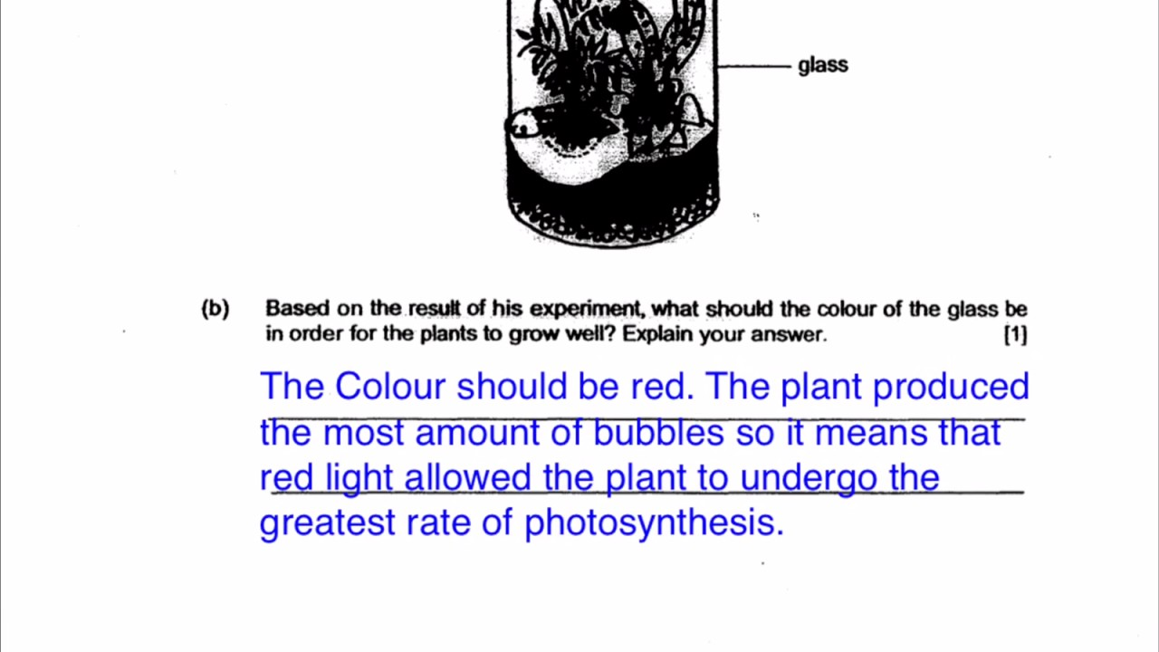 PSLE Science  Funny answers students write and how to properly answer  structured questions