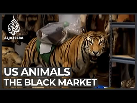 The black market animal business