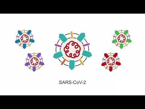Introducing SARS-CoV-2: learn