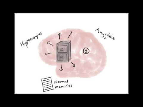 Brain Model of PTSD - Psychoeducation Video