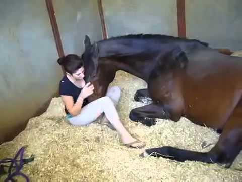 video cewe mesum sama kuda.Mantap