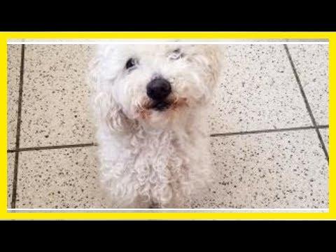 Breaking News | Marathon County Pet of the Week: Lassie, the dog