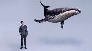 🐳 Синий Кит Я В ИГРЕ! Море Китов. Тихий Дом. Разбуди меня в 4:20. #МореДельфинов