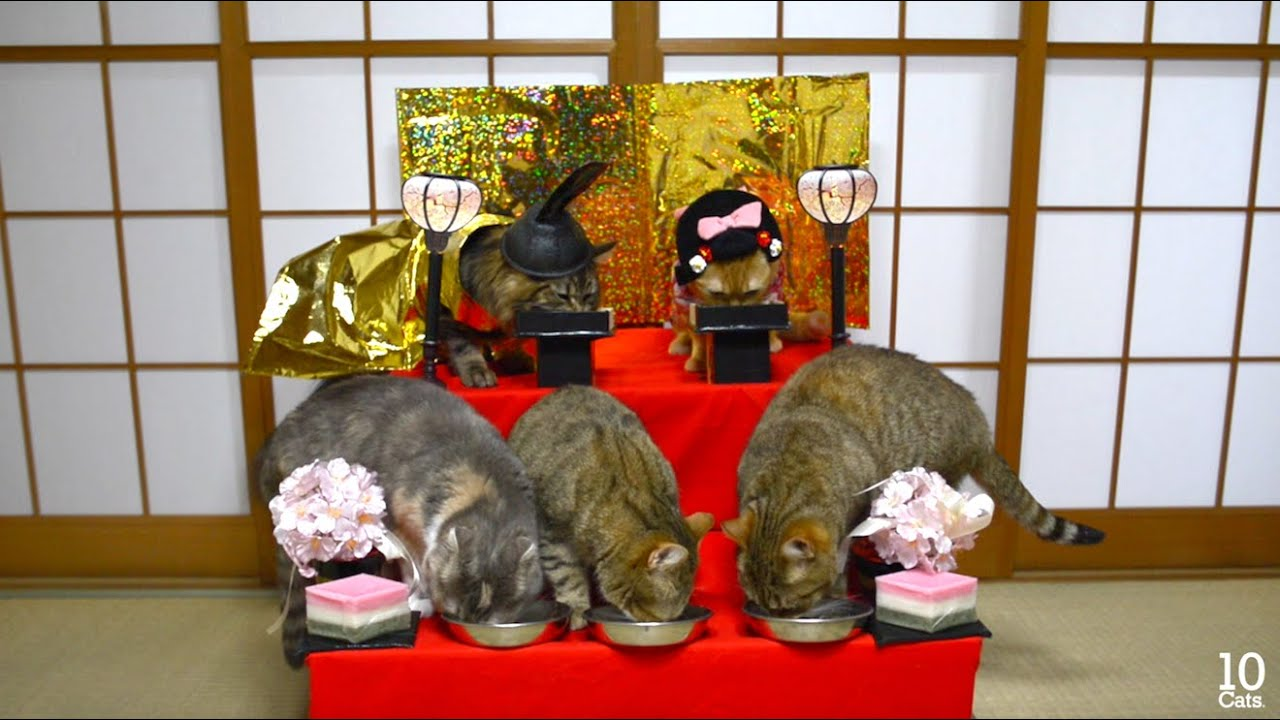 猫の雛人形\u003dↀωↀ\u003d Cat Hina Doll Cosutume