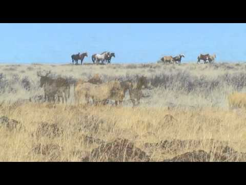 birdy wild horses free mp3 download