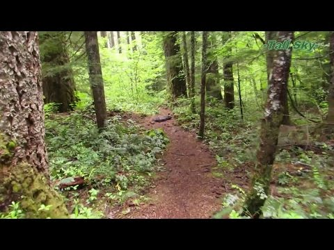 Virtual Hike: Pristine Forest Wilderness to Lake, Actual Sound 50min (#6B)