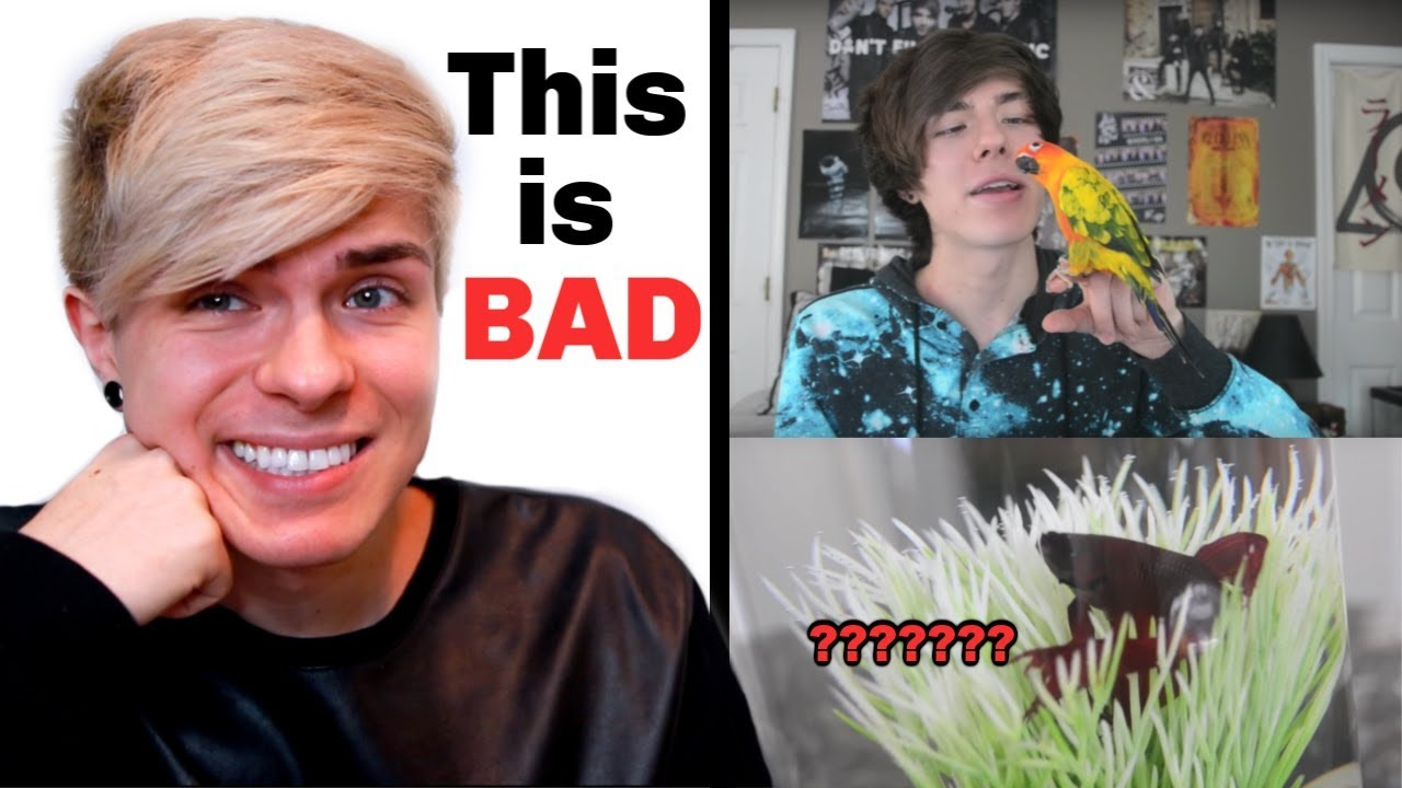 reacting-to-my-first-meet-my-pets-video-and-bad-pet-care