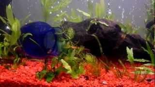 38 gallon freshwater aquarium