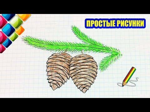 Как рисовать шишки