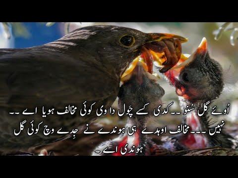 pakistan-time-worms