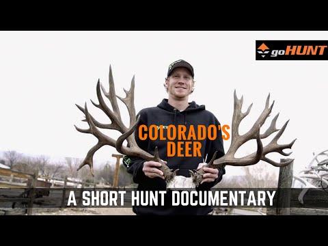 Colorado's Deer: A Hunter's Cinderella Story