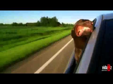 iFun ru video Dog enjoys the breeze