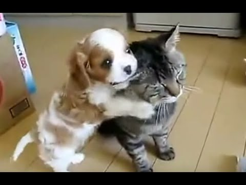 Sweet Dogs & Cats Buddy