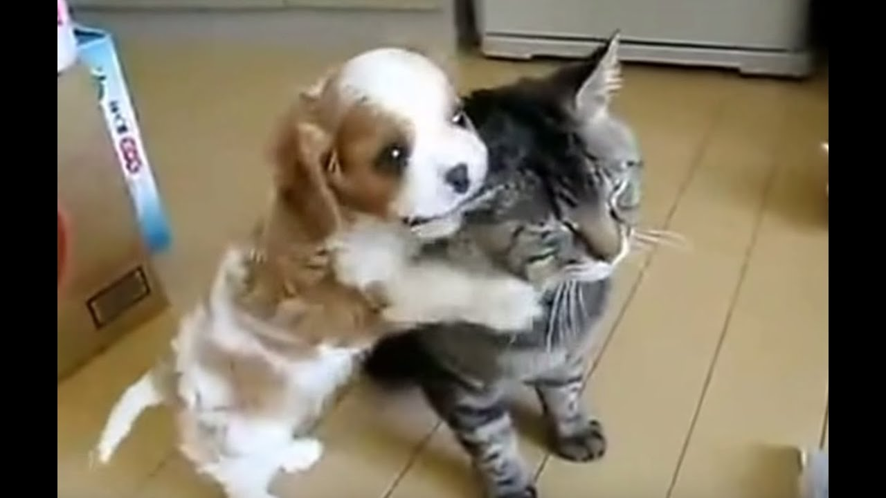 Cats And Dogs Buddy