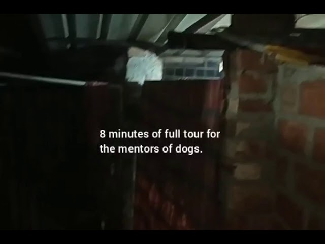PAWS shelter tour this winter, 19/12/20.