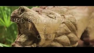 DED BUDDY (QWECi)  x  OGO  - CELEBREZ