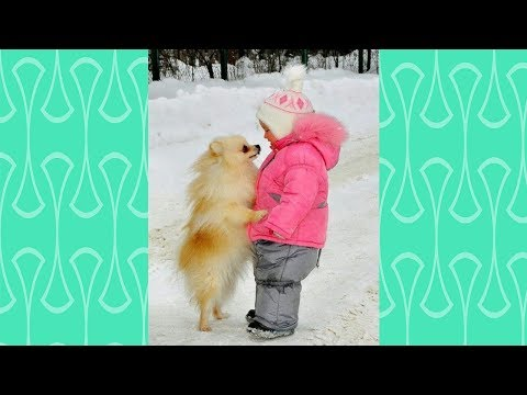 Pomeranian puppy and Baby attracting each other –  Cutest Puppies and babies Videos